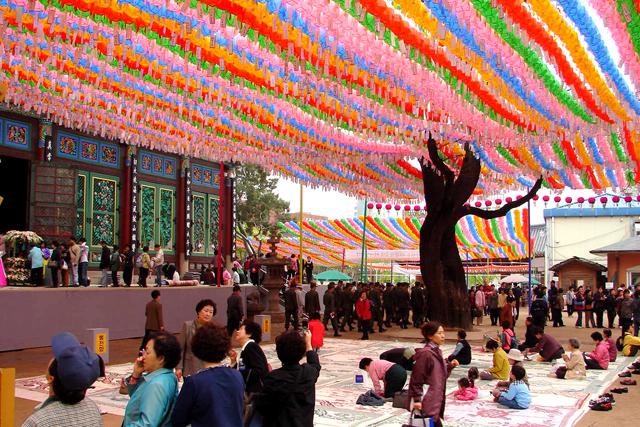 Jogyesa Chinese Scholar Tree
