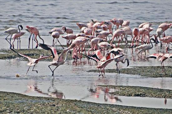 Sewri Jetty (Bird Spot)