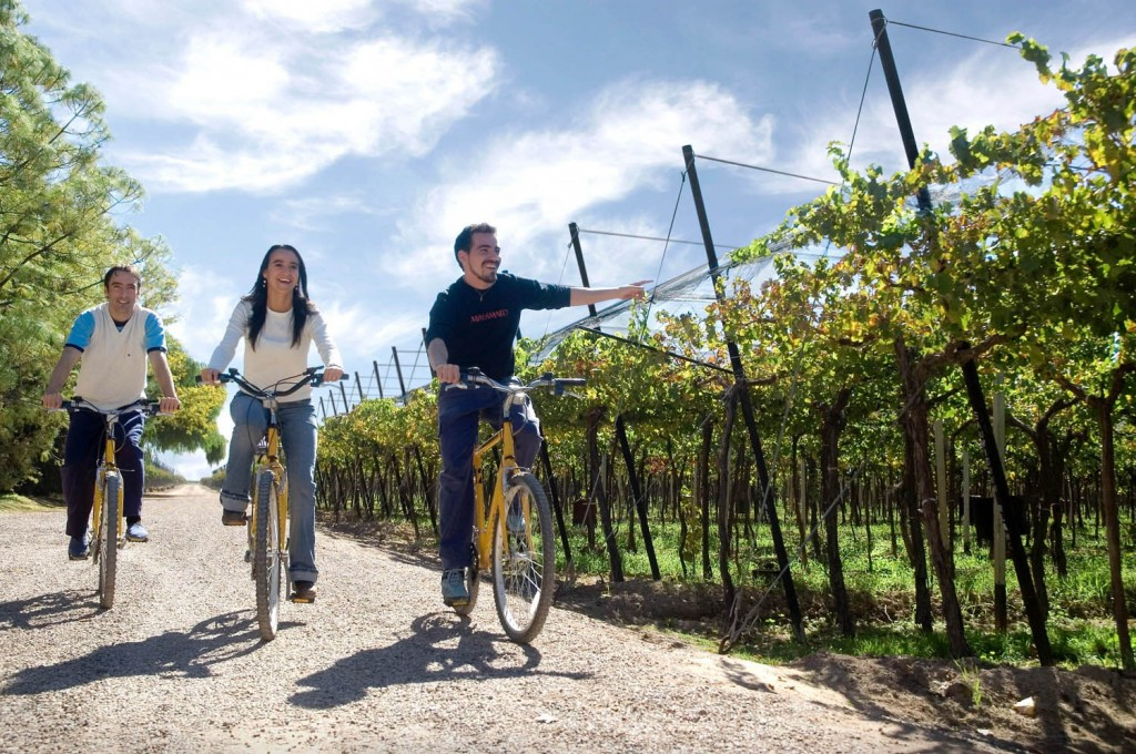 Baccus Vineyards Biking