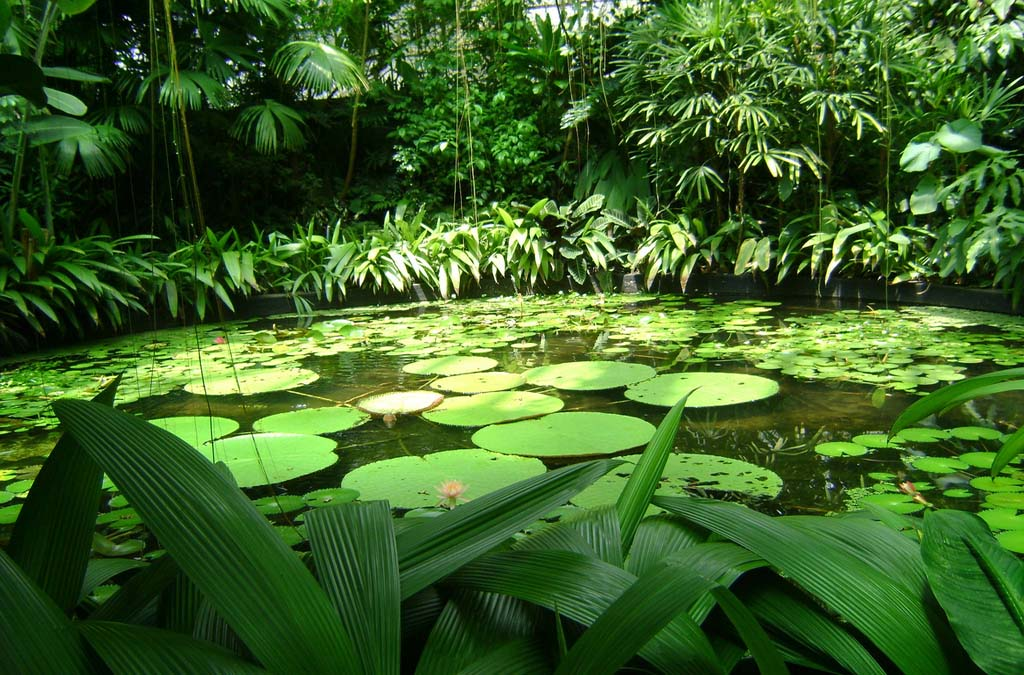 El Jardín Botánico José Celestino Mutis
