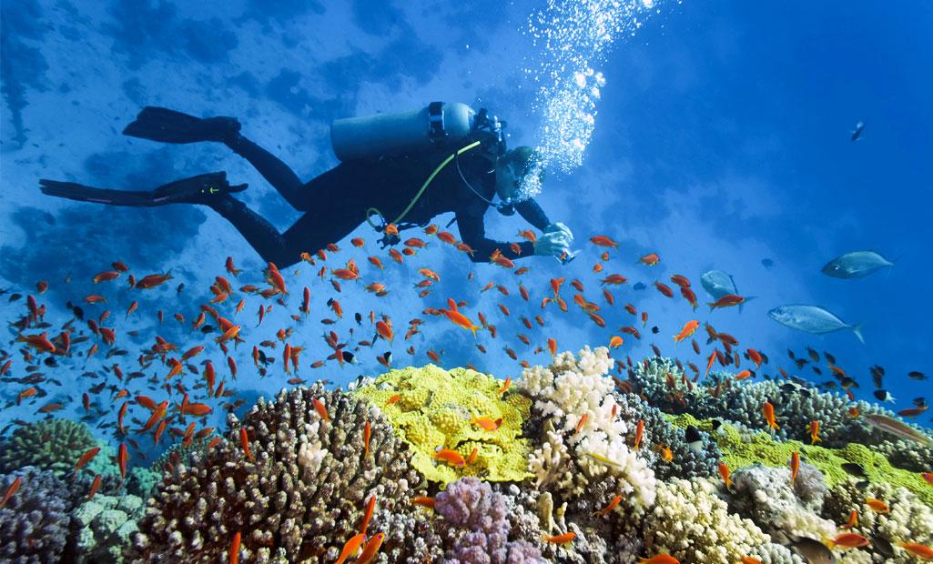 Scuba diving Grand Baie