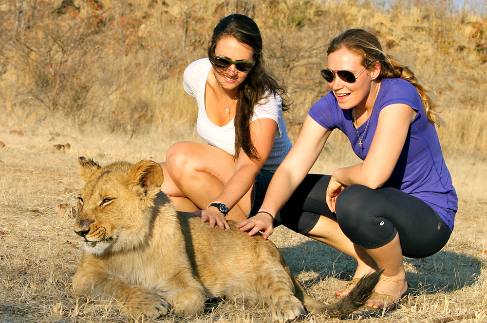Walking with Lions at Victoria Falls